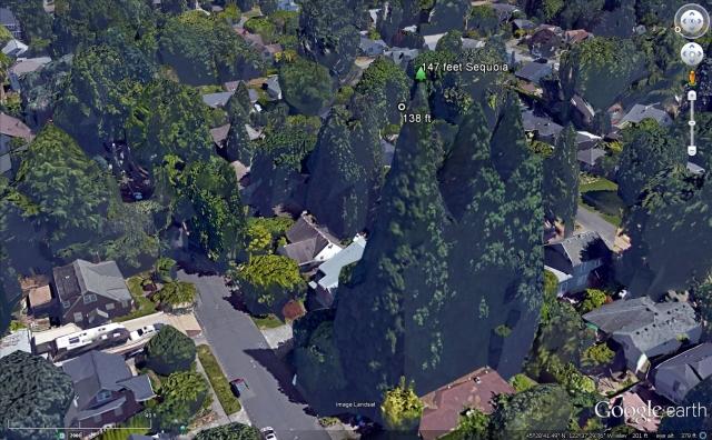 East Moreland Sequoias