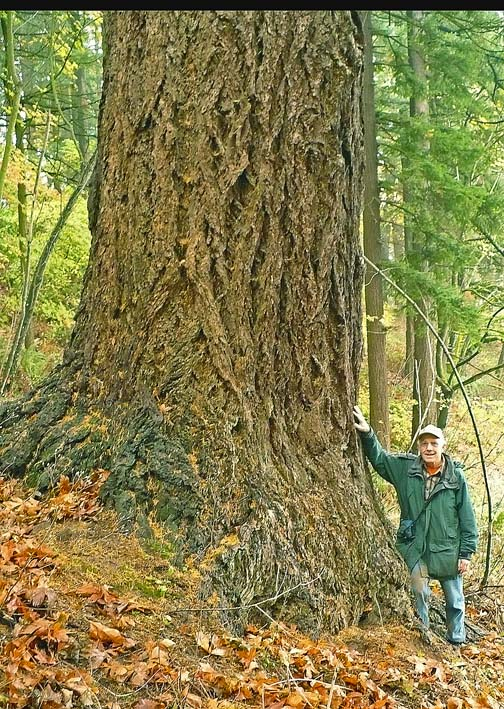 Darvel at largest Douglas-fir in Mt. Tabor Park, 11-6-2013, low-res.
