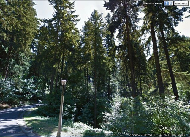 Tallest trees in Mt Tabor located in gulch on Salmon Way, just south of the picnic area.